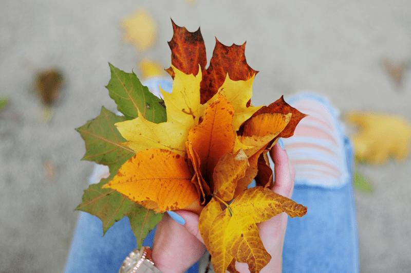 piękny bukiet z liści złota jesień polska ogród saski park
