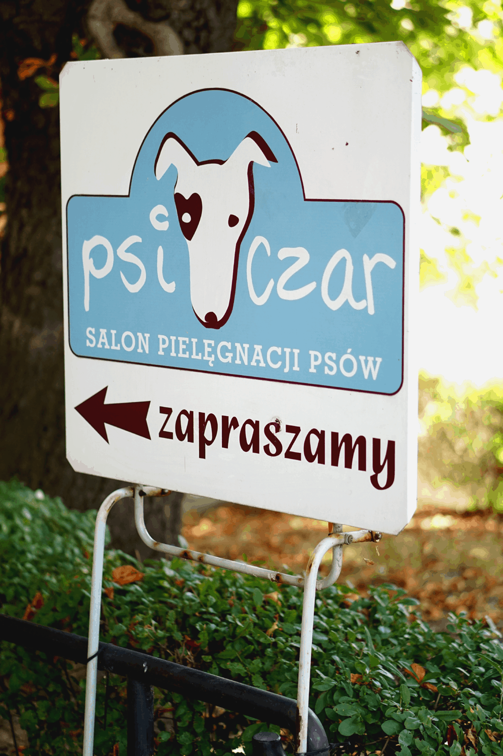 psi czar logo saska kępa