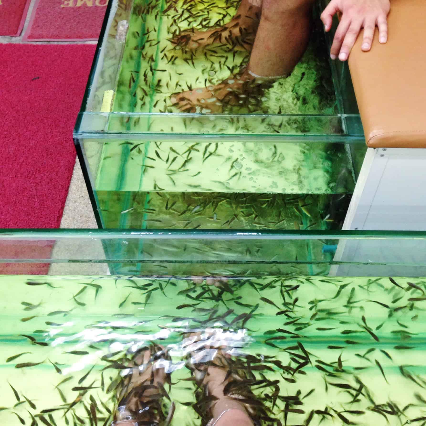 Co to takiego ichtioterapia? Czy warto wypróbować fish spa?