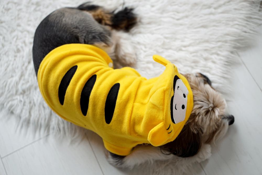 tosia tygrysek ubranka dla psa