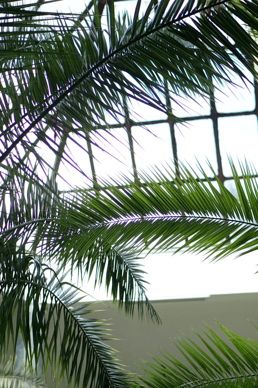 palmy w nałęczowie pijalnia wedel