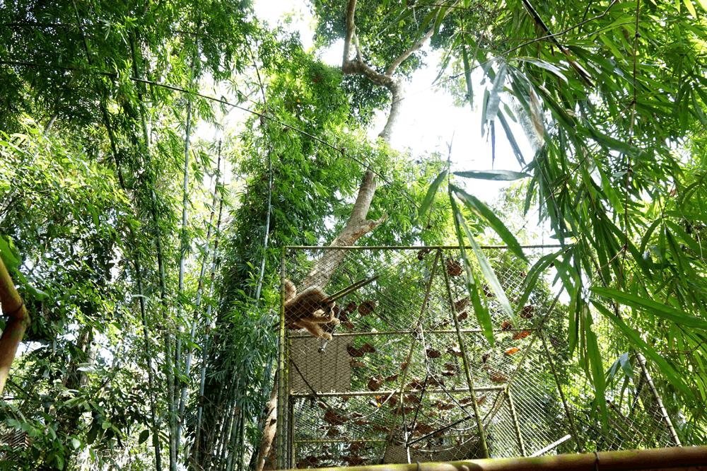 Atrakcje turystyczne w Phuket: Gibbons Rehabilitation Program jak to wygląda naprawdę