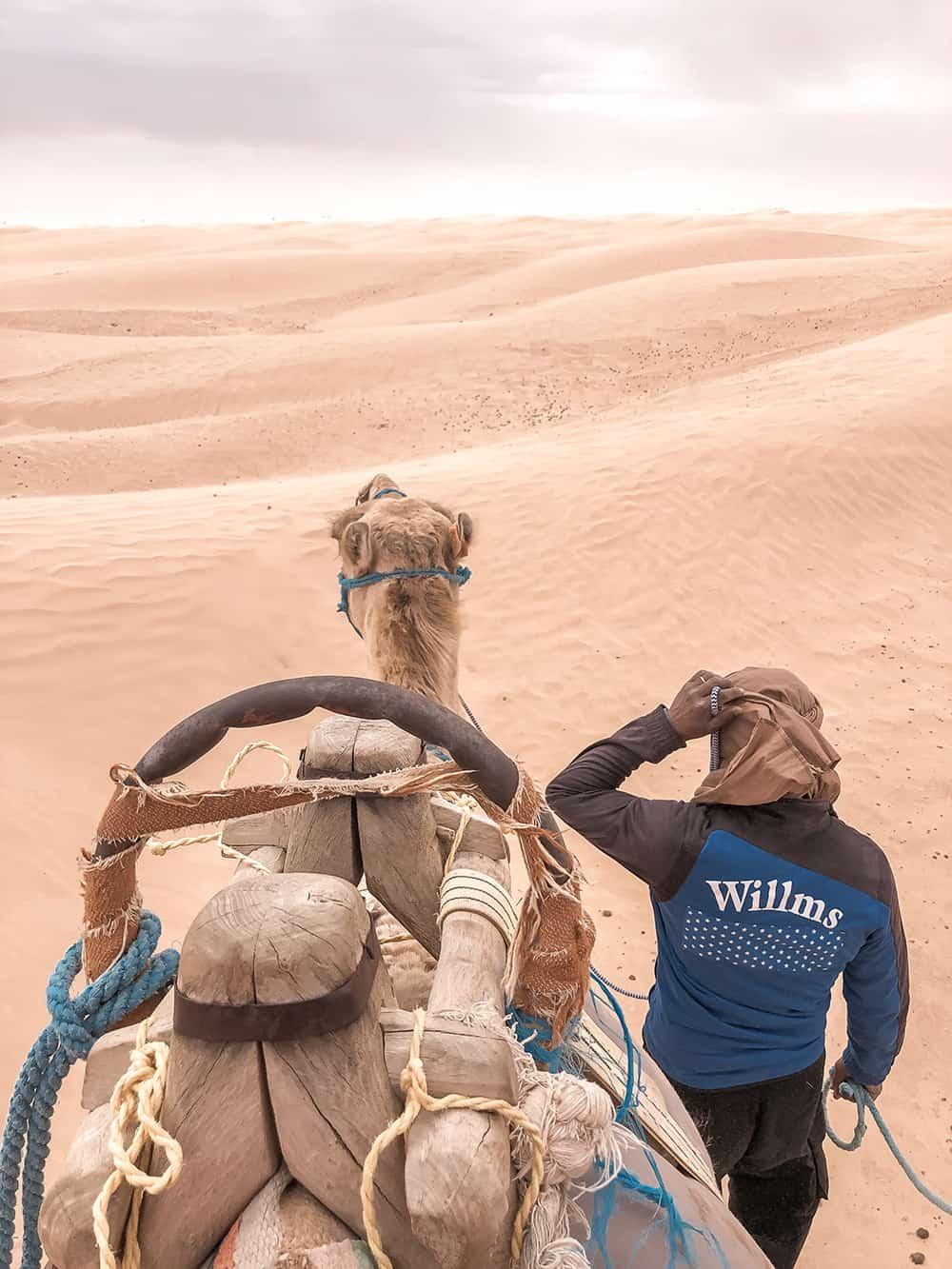 tunezja jazda na wielbłądzie douz